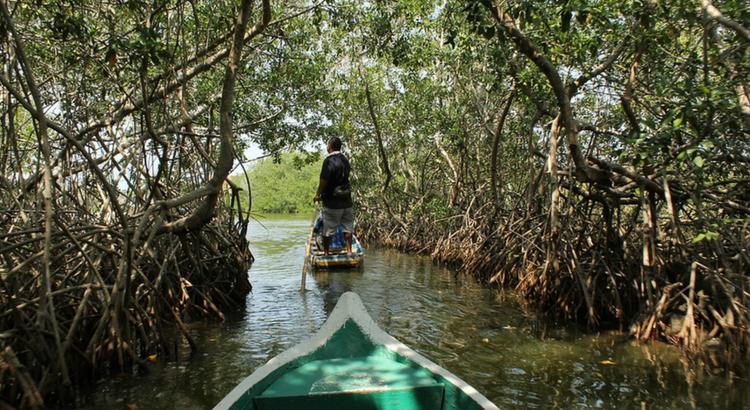 O bem que o meio ambiente faz: conhecendo os manguezais