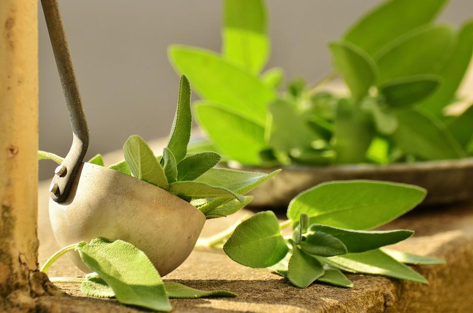 Ponto Natural e Mundo Verde dispõem de produtos voltados ao bem-estar do público