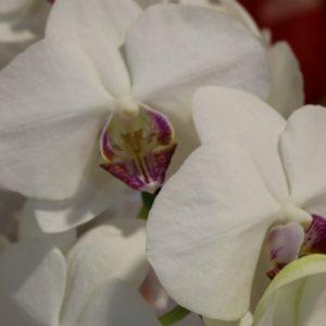 Mais de 50 tipos de flores naturais no Perini