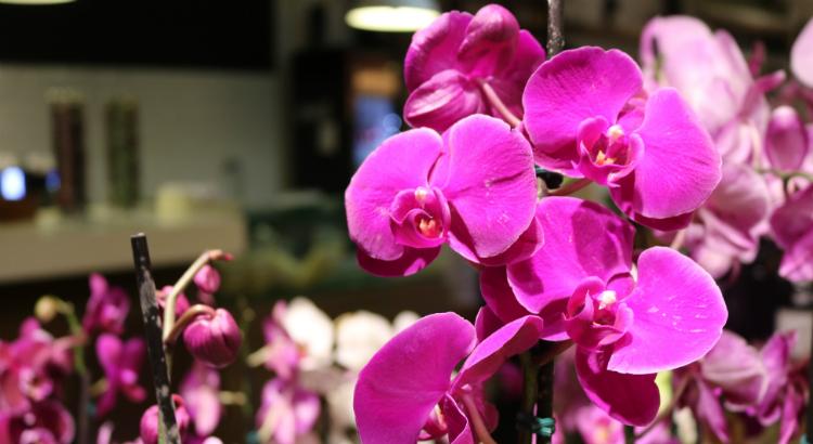Orquídeas: presente cheio de delicadeza para o seu amor