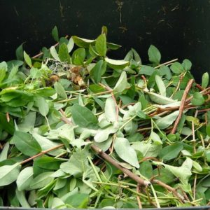 Alimentando novas atitudes com a compostagem