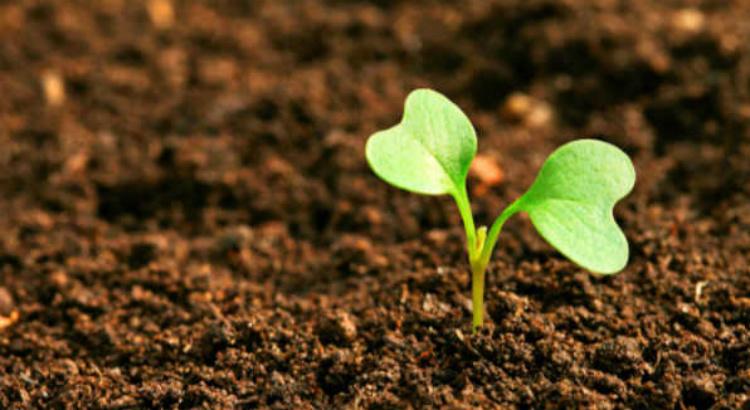 Índia será a sede do Dia Mundial do Meio Ambiente