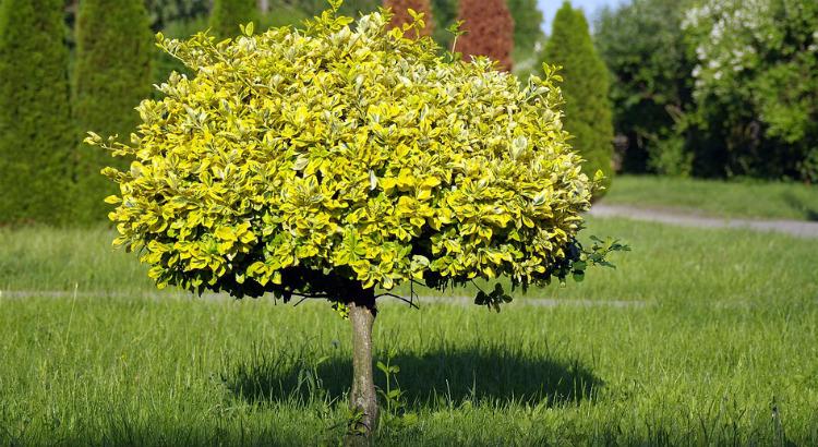 Nossa árvore de cada dia