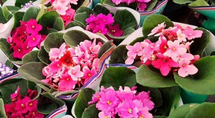 Feira no RioMar Recife tem flores direto de Holambra