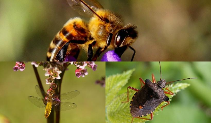 Pequenos guardiões da natureza: a importância dos insetos nas áreas verdes