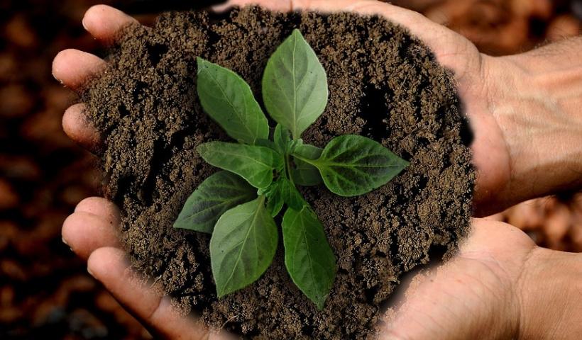 Consumo e sustentabilidade