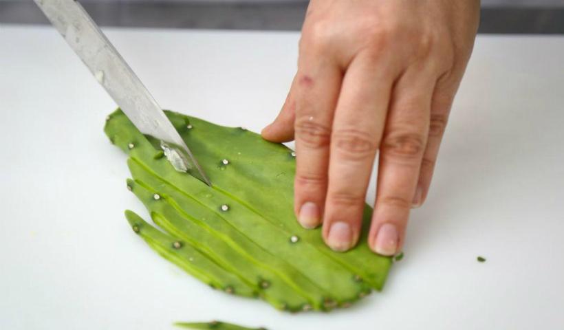 Uso de plantas como palma na alimentação