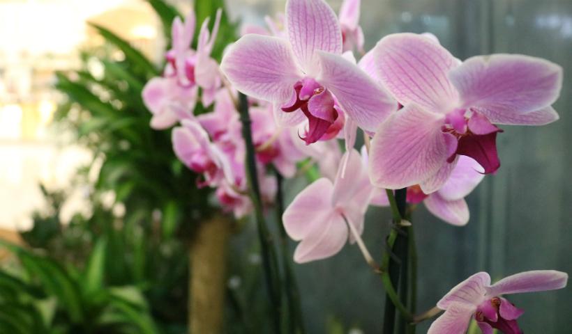 Feira de plantas dispõe de várias espécies exuberantes