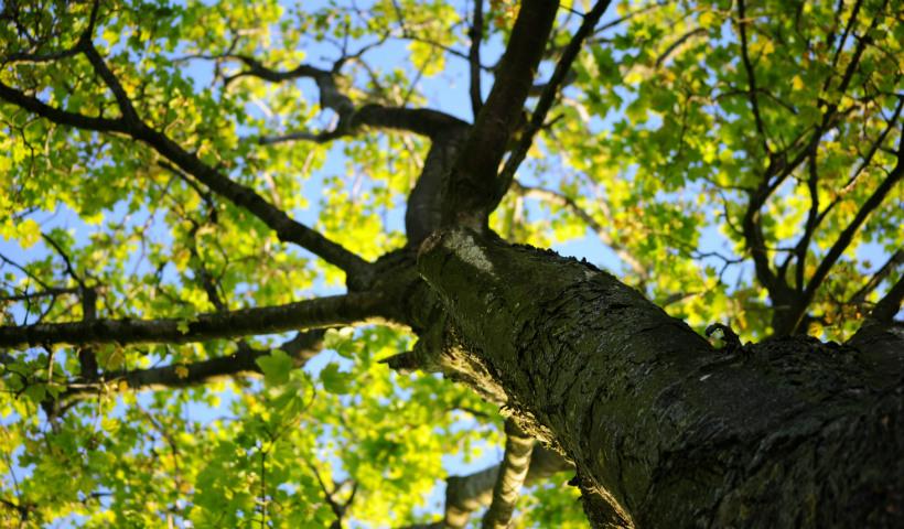 Dia da Árvore: saiba como elas ajudam sua vida