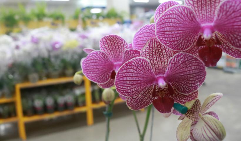 Orquídeas: flor especial que revela força e espiritualidade