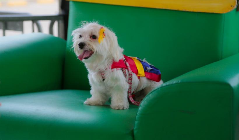Em março, tem a 3ª edição do Lá Fora Pet Park no RioMar
