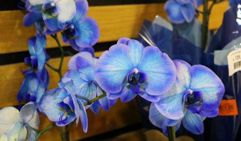 Cinco dicas de plantas para dar vida à sua casa