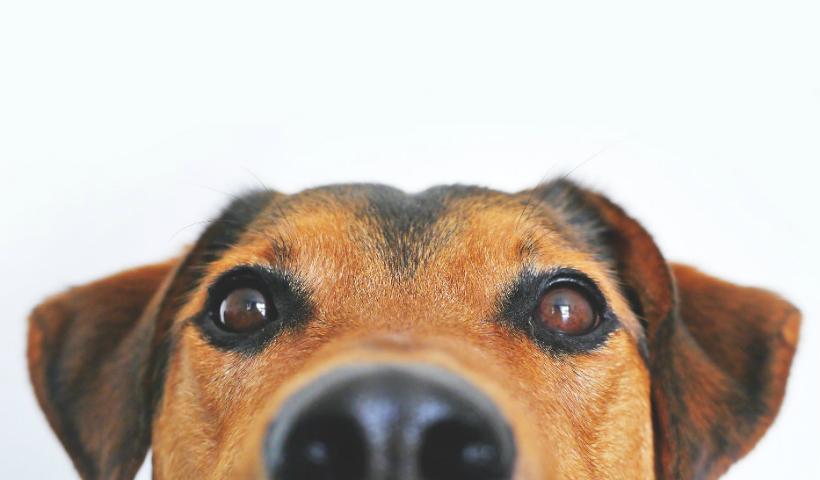 Lá Fora Pet Park: Secretaria de Direito dos Animais marca presença