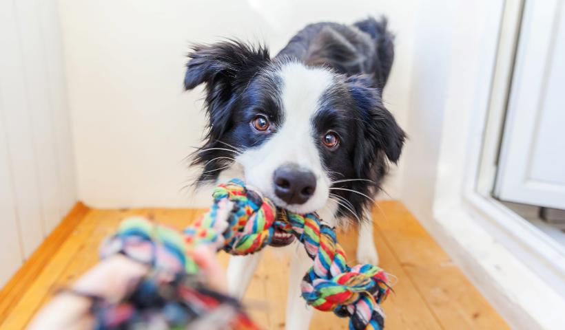 Dicas e atividades para divertir seu pet em casa