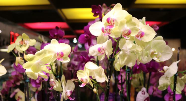 Ganhou uma orquídea na quarentena? Veja como cuidar