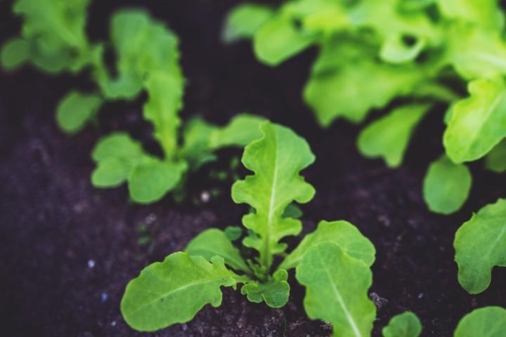 4 alimentos orgânicos que promovem o bem-estar para cultivar em casa