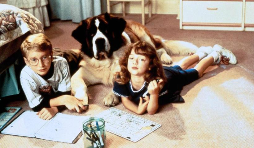 5 filmes para assistir ao lado do seu 'cãopanheiro'