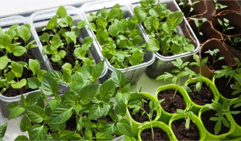 Saiba como ter uma horta em casa reaproveitando os alimentos