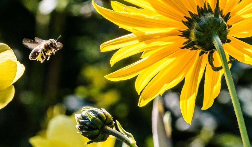 Saiba como os insetos podem ser importantes para você