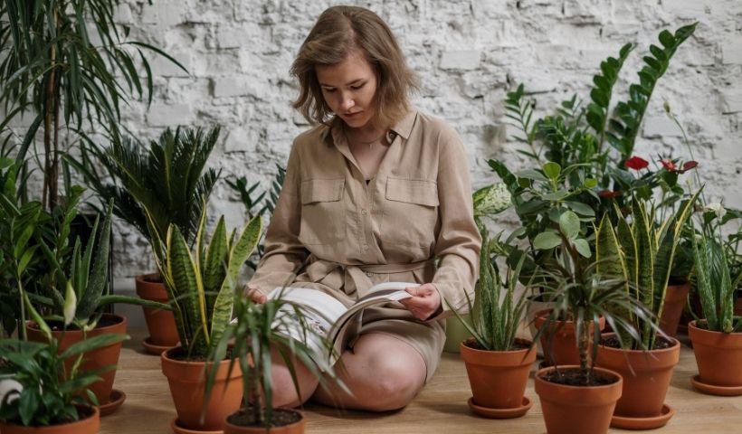 O que é sustentabilidade? 4 livros que ajudam a entender