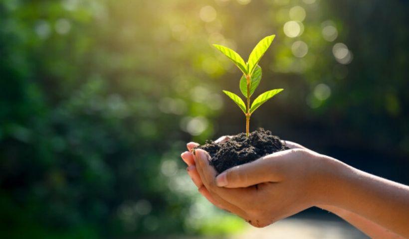 Sustentabilidade: é fácil, simples e você pode começar agora mesmo