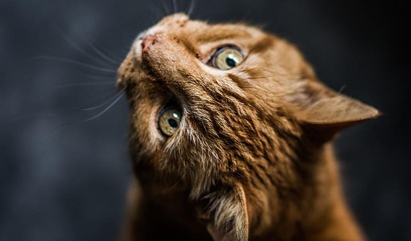 Caixas de areia diferenciadas para quem tem gato em casa