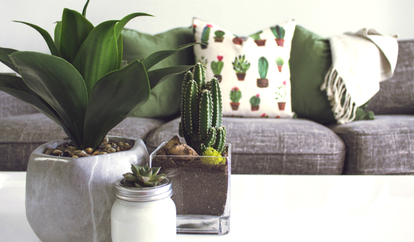 Plantas dentro de casa: os benefícios dessa onda verde