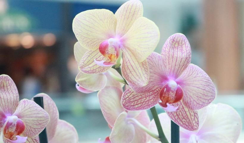 Orquídeas na decoração: escolha a sua no RioMar