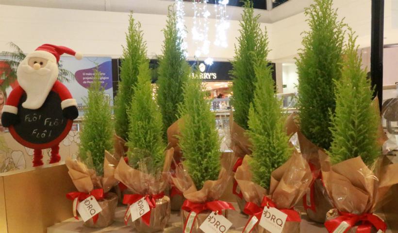 Pinheiros naturais para deixar sua casa no clima do Natal