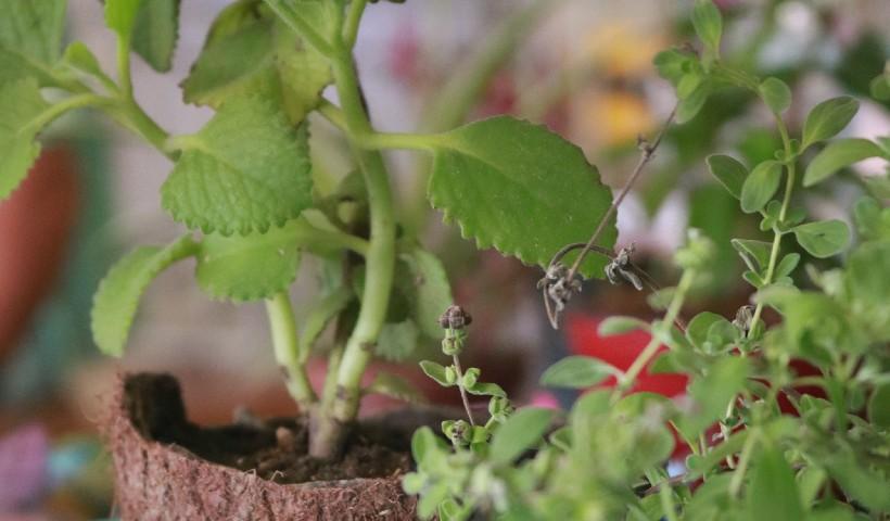 Feira Agroecológica funciona na Quarta de Cinzas