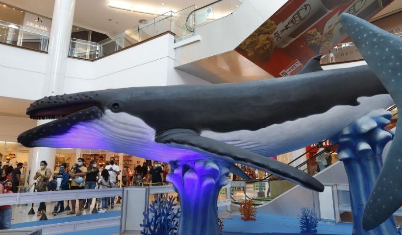 Baleia é peixe? Essa e outras curiosidades sobre o fundo do mar
