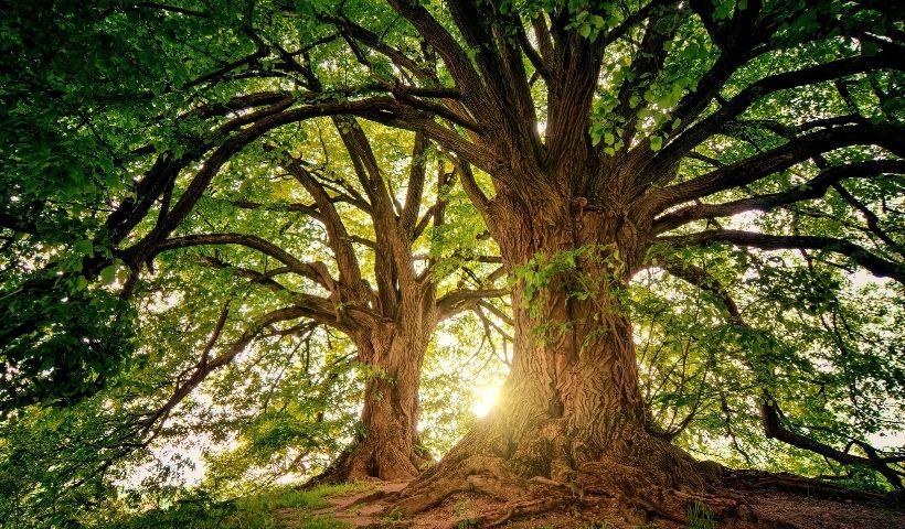 Dia da Árvore: como contribuir com gestos de impacto positivo